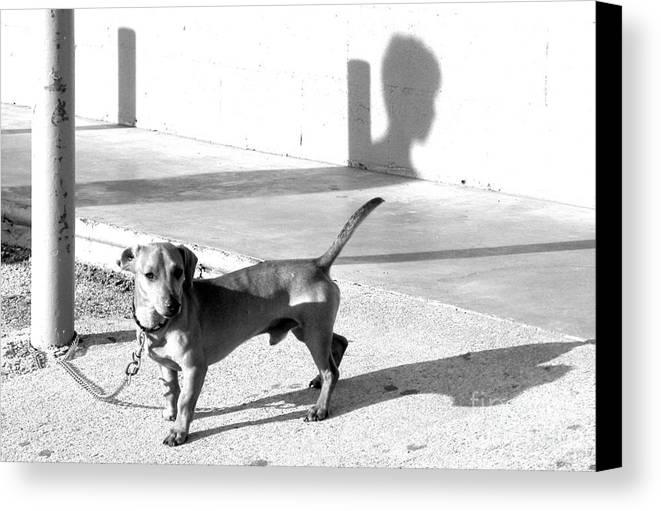 Dog Canvas Print featuring the photograph Boy Meets Dog by Joe Jake Pratt