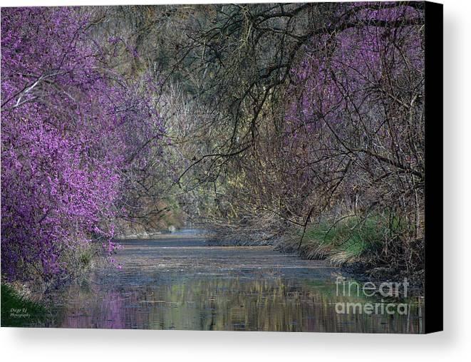 Davis Canvas Print featuring the photograph Davis Arboretum Creek by Diego Re