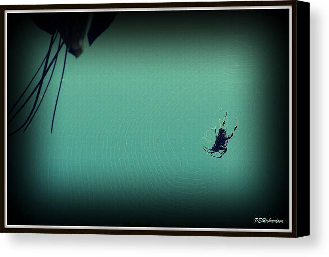 Spider Canvas Print featuring the photograph Home Sweet Home by Priscilla Richardson