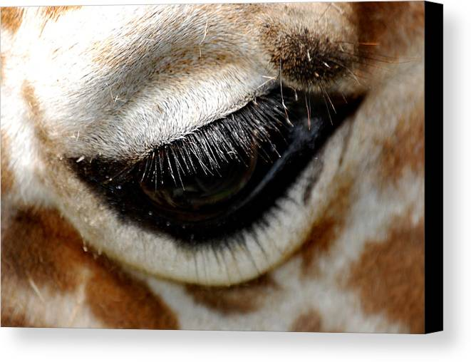Eye Canvas Print featuring the photograph Lashes On The Eye by Skip Willits