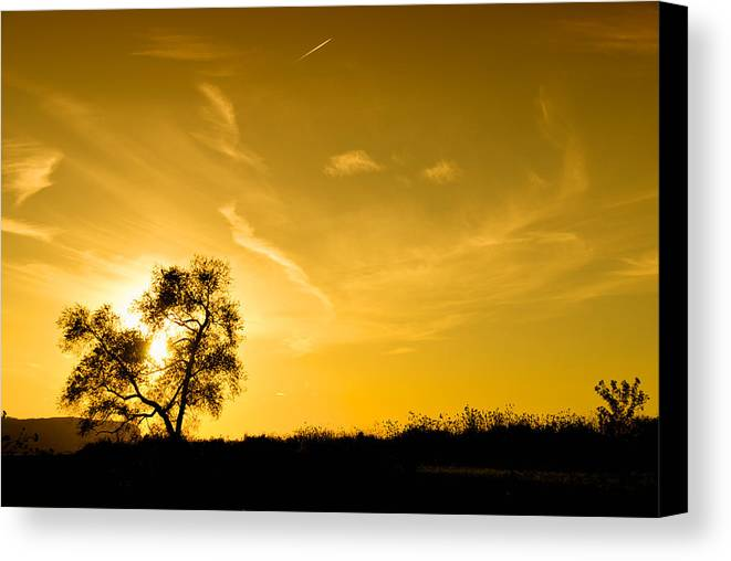 Tree Canvas Print featuring the photograph Lonesome Tree by Andre Distel
