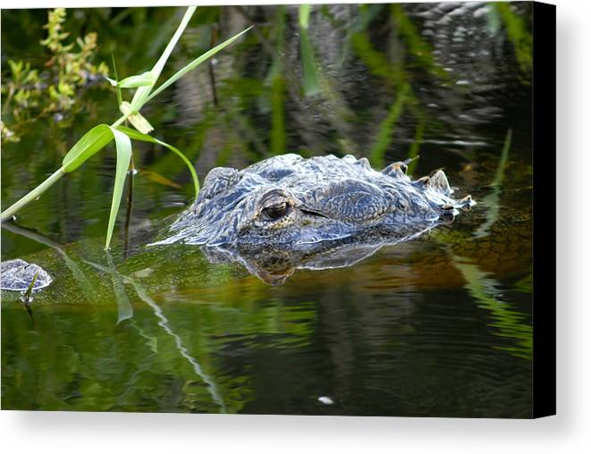 Wildlife Photography Canvas Print featuring the photograph My Home Myakka by David Lee Thompson