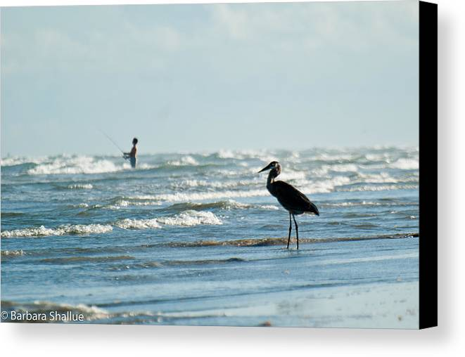 Fishing Canvas Print featuring the photograph Of Like Mind by Barbara Shallue