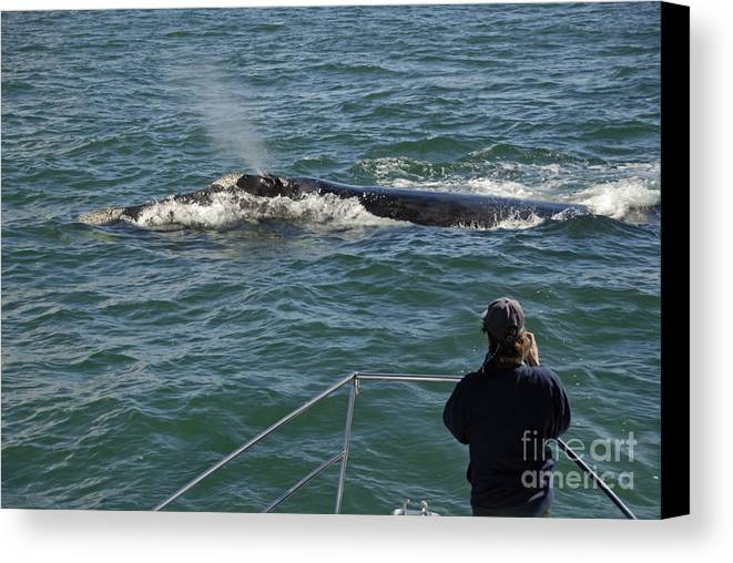 People Canvas Print featuring the photograph Photographer On Whale Watching Boat by Sami Sarkis