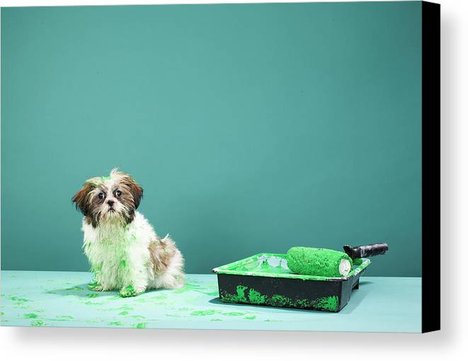Horizontal Canvas Print featuring the photograph Puppy Covered In Green Paint From Paint Tray by Martin Poole