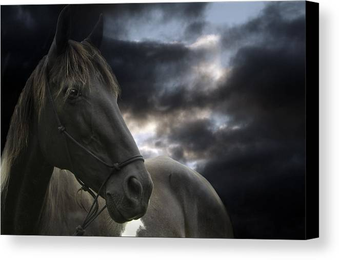 Horse Canvas Print featuring the photograph The Departure by Maggie Dee