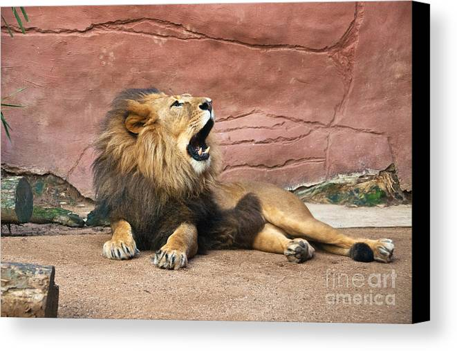 Photograph Canvas Print featuring the photograph The King Speaks by Bob and Nancy Kendrick