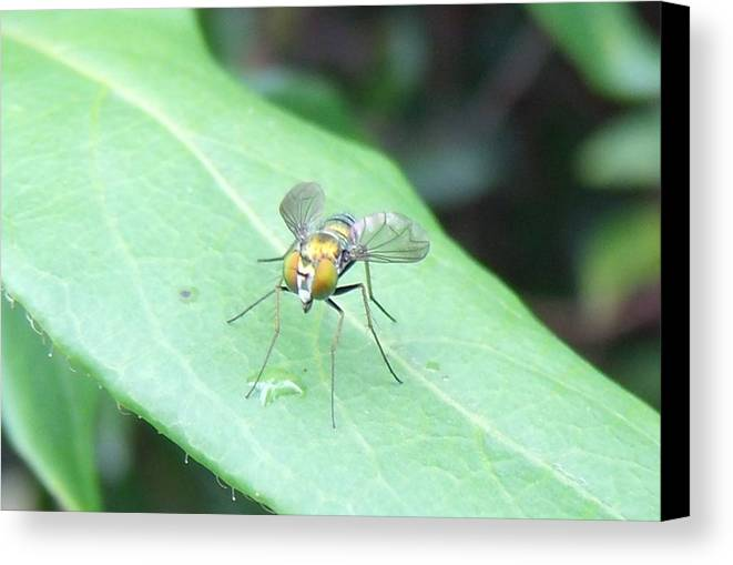 Fly Canvas Print featuring the photograph Tiny Fly by Crystal Williams