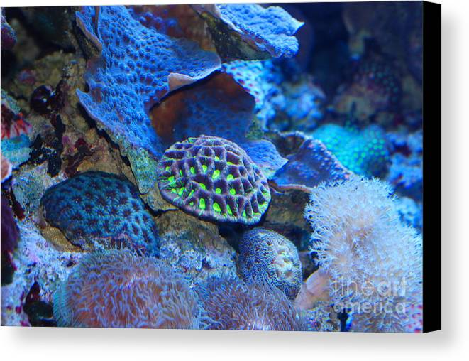 Aquarium Of The Pacific Canvas Print featuring the photograph Underwater Paradise by Andrea Simon