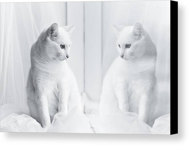 Horizontal Canvas Print featuring the photograph White Cat Reflected In Window by Vilhjalmur Ingi Vilhjalmsson