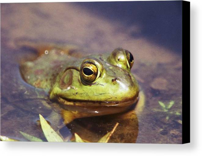 Frog Canvas Print featuring the photograph 072606-3 by Mike Davis