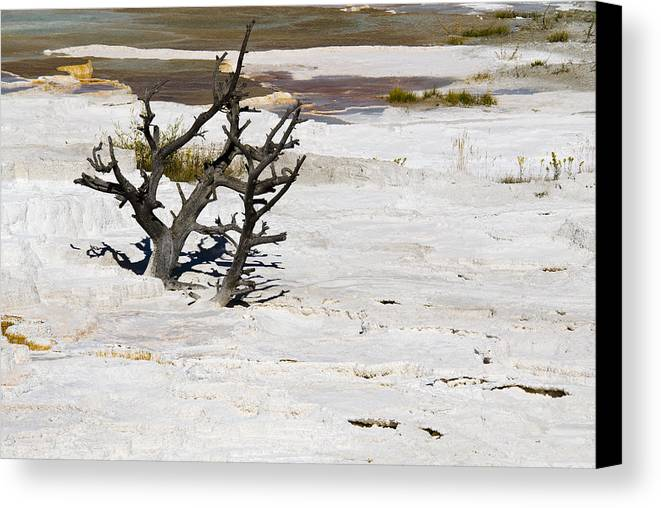 Yellowstone Canvas Print featuring the photograph Desolate by Chad Davis