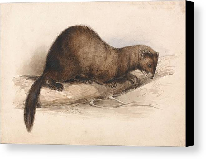Art Canvas Print featuring the painting Edward Lear, A Weasel by Edward Lear