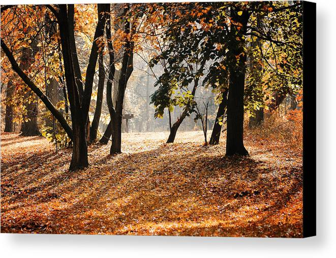 Morning Canvas Print featuring the photograph Autumn In The Park by Andriy Zolotoiy