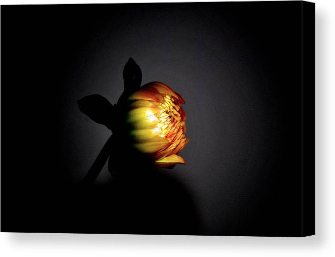 Flower Canvas Print featuring the photograph Baby Bud by Trudi Southerland