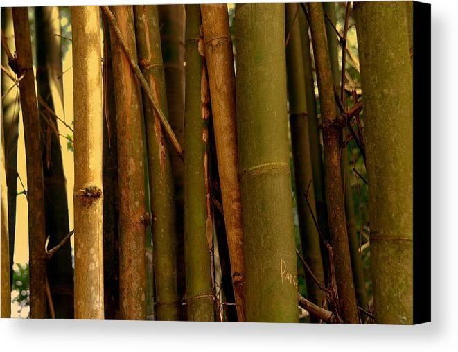 Bamboo Canvas Print featuring the photograph Bambusa Vulgaris by Susanne Van Hulst