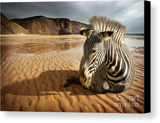 Africa Canvas Print featuring the photograph Beach Zebra by Carlos Caetano