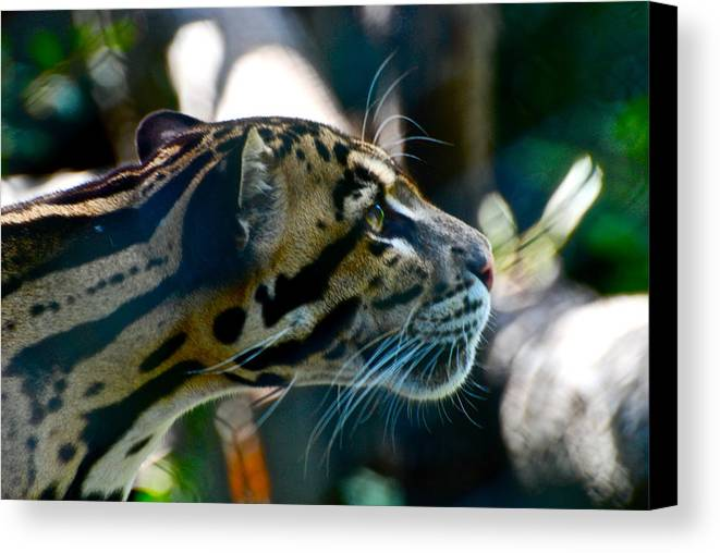 Big Cat Canvas Print featuring the photograph Big Cat by Gene Sizemore