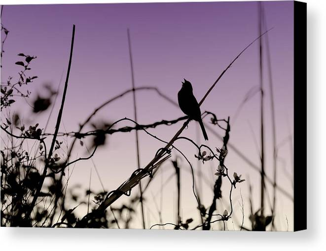 Silhouette Canvas Print featuring the photograph Bird Sings by Angie Tirado
