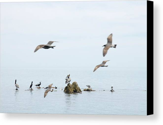 Seagull Canvas Print featuring the photograph Birds by Elisa Locci