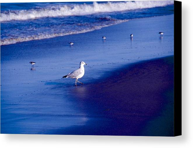 Ocean Canvas Print featuring the photograph Birds On Beach by George Ferrell