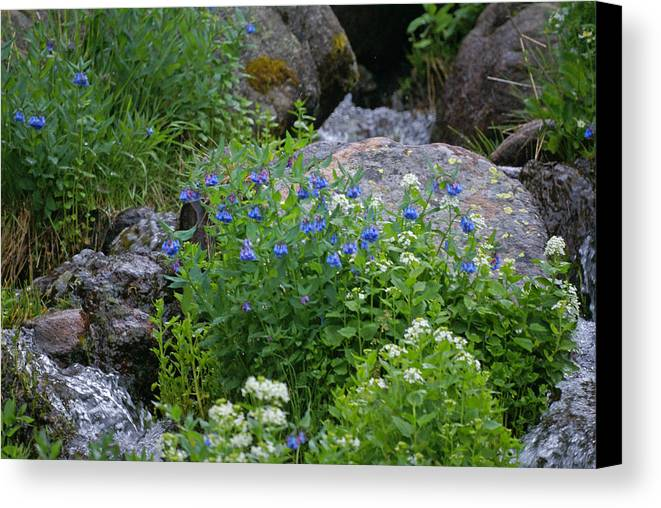 Wildflowers Canvas Print featuring the photograph Bluebells by Heather Coen