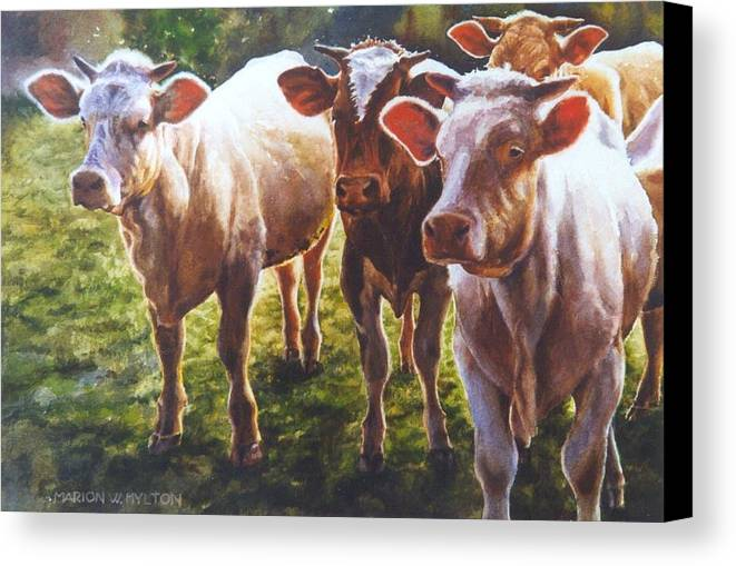 Animals Canvas Print featuring the painting Bovine Curiosity by Marion Hylton