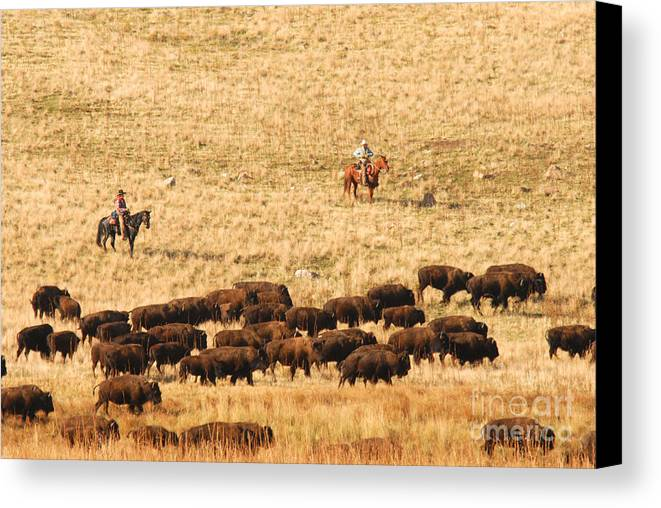 Utah Canvas Print featuring the photograph Buffalo Roundup by Dennis Hammer