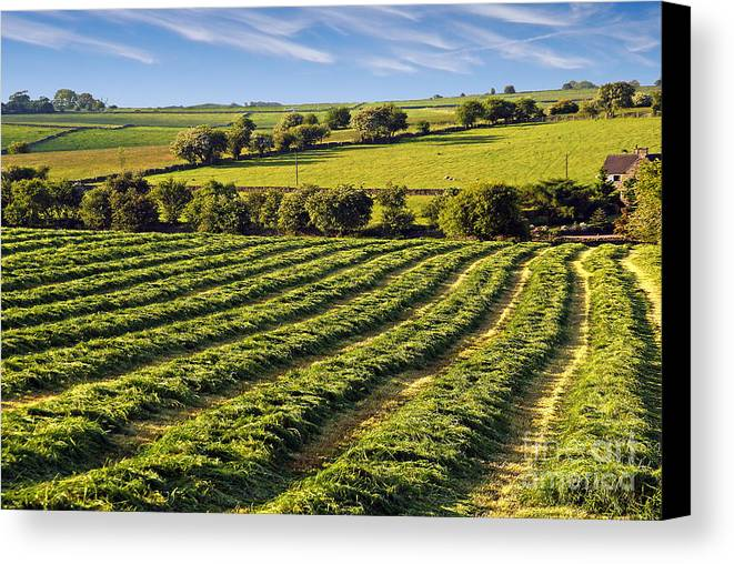 Peak Canvas Print featuring the photograph Crop Patterns by Rod Jones