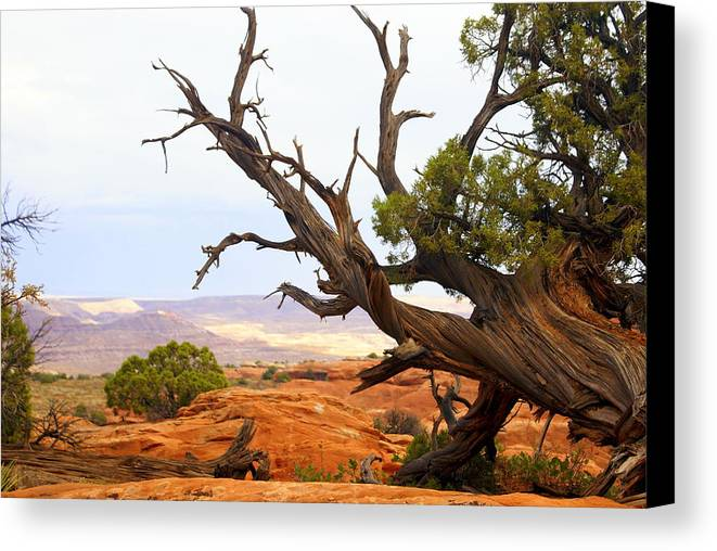 Southwest Art Canvas Print featuring the photograph Devils Garden 2 by Marty Koch