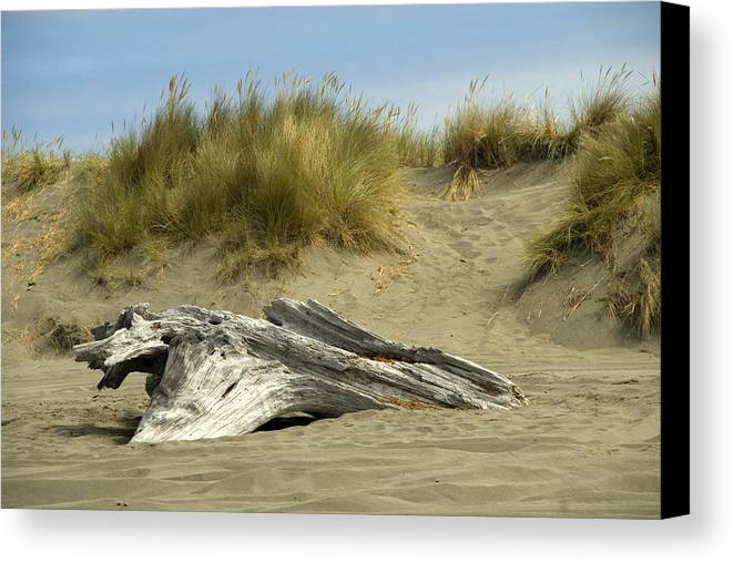 Wood Canvas Print featuring the photograph Driftwood by Jessica Wakefield