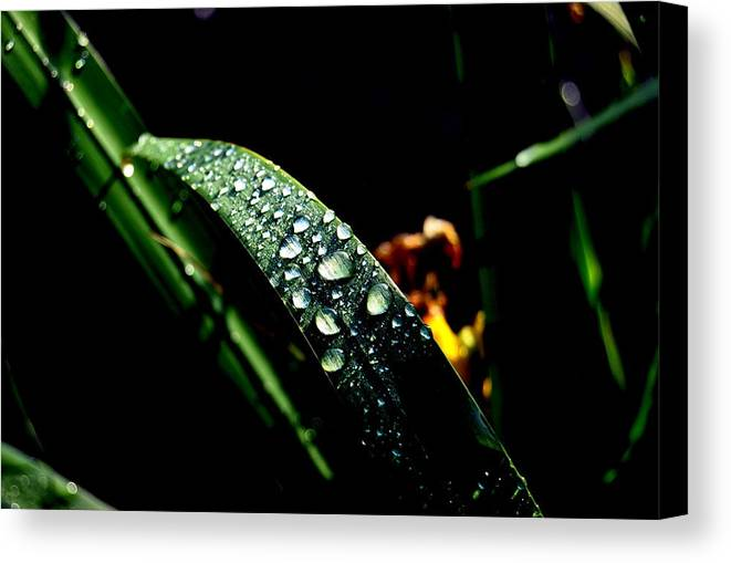 Canvas Print featuring the photograph Droplets Of Water by Robert Scauzillo