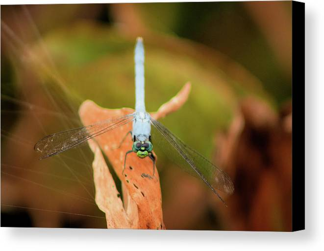Dragonfly Canvas Print featuring the photograph Face Of The Dragon by Karl Ford