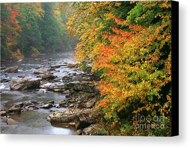 Cranberry River Canvas Print featuring the photograph Fall Along The Cranberry River by Thomas R Fletcher
