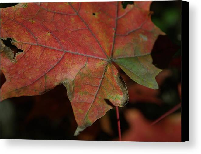 Fall Canvas Print featuring the photograph Fall Leaves 1 by Eric Workman