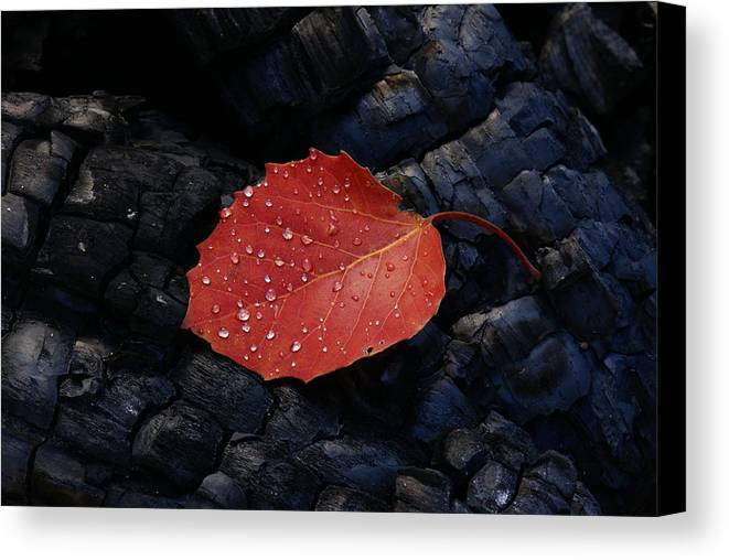 Wood Canvas Print featuring the photograph Fireplace by Andreas Freund
