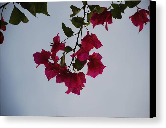 Flowers Canvas Print featuring the photograph Flowers In The Sky by Rob Hans