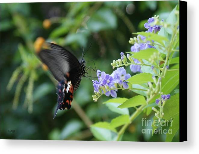 Butterfly Canvas Print featuring the photograph Fly In Butterfly by Shelley Jones
