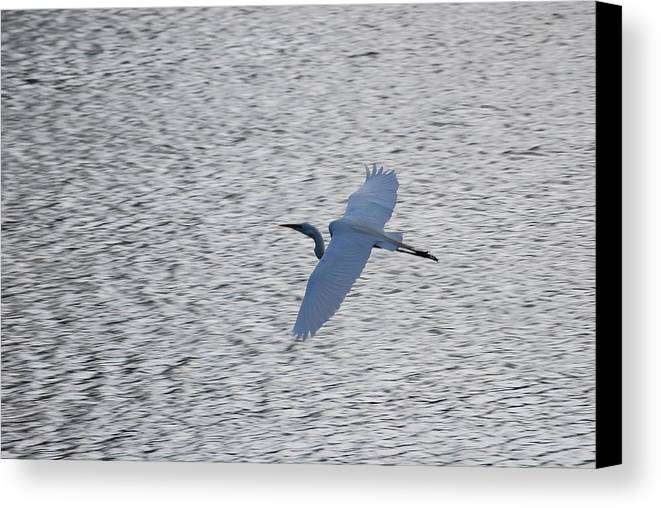 Flight Canvas Print featuring the photograph Flying Over Water by Peter McIntosh
