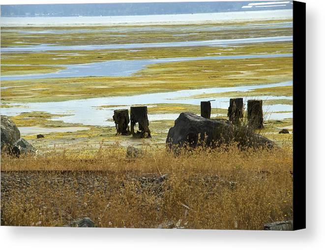Swamp Canvas Print featuring the photograph Forgotten Pier by Jessica Wakefield