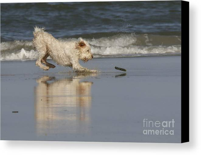 Animals Canvas Print featuring the photograph Fun In The Surf by Myrna Bradshaw