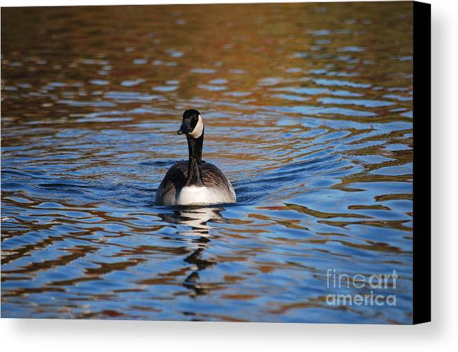 Goose Canvas Print featuring the photograph Glide by Joy Bradley