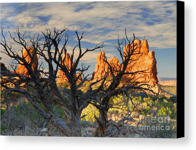 Arches Canvas Print featuring the photograph Glove Rock by Dennis Hammer