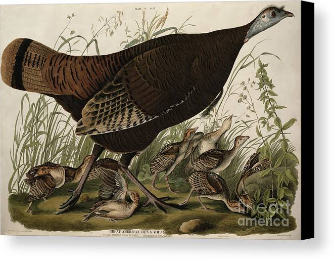 Great American Hen And Young Canvas Print featuring the painting Great American Hen And Young by John James Audubon