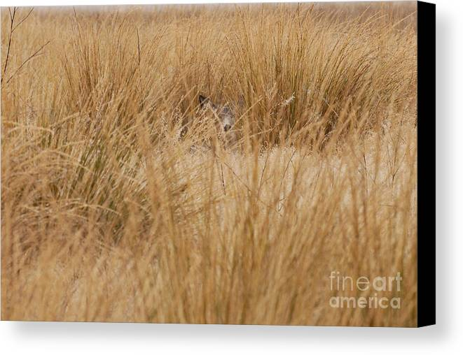 Deer Canvas Print featuring the photograph Hidden Mule Deer by Dennis Hammer