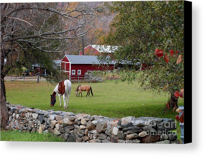 Horses Canvas Print featuring the photograph Horses by Andrea Simon