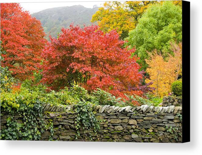Leaves Canvas Print featuring the photograph Incredible Fall Colors by Charles Ridgway