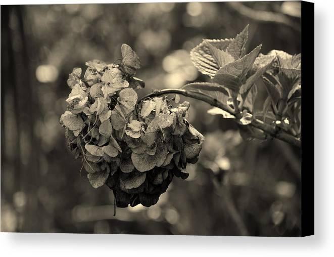 Life And Death Canvas Print featuring the photograph Life And Death by Susanne Van Hulst