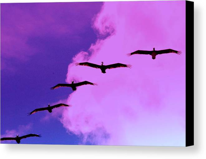 Pelicans Canvas Print featuring the photograph Me And My Shadows by Trudi Southerland