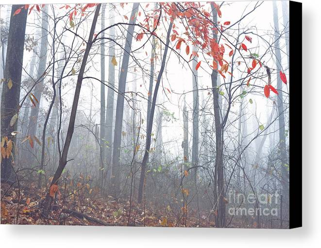 West Virginia Canvas Print featuring the photograph Misty Woodland Showing The Last Fall Color by Thomas R Fletcher